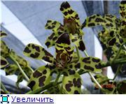 Орхидеи и прочая красота на о. Пхукет 1cf77479cef2t