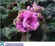 Цветики-цветочки разные - Страница 2 5fcb47c43fbdt