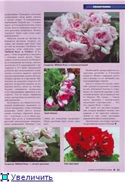 Пеларгонии - Страница 23 8dafc60eacbbt