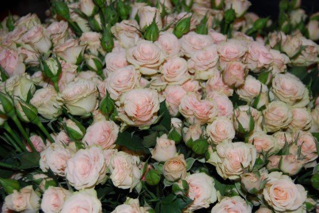 Международая выставка «Цветы.Ландшафт .Усадьба 2010» Астана - Страница 4 Bdbb752581b2