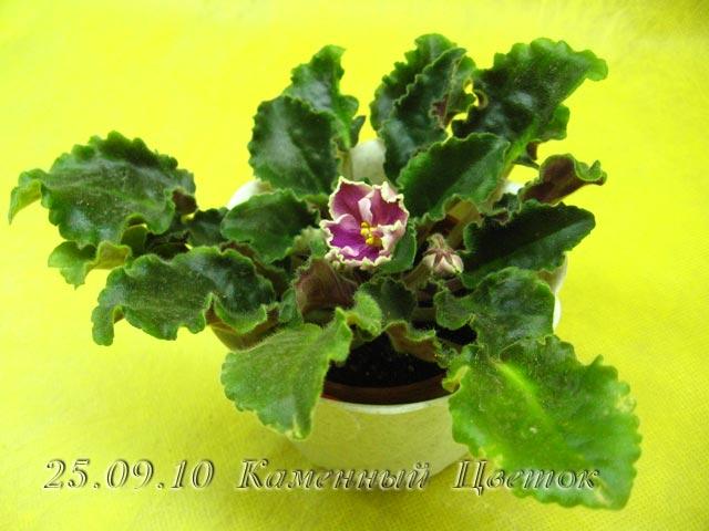 Цветение к Н. Г. (Olga-flora) F66f608516b5