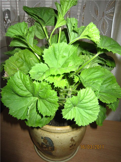 Мои цветулечки - Страница 11 2afe47298415