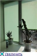 Хвастаем рулонками, бамбуком и жалюзи! 869138b683fct
