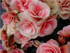 Рай тюльпанов или Кёкнхов - 2012 A3b10692d9cdt