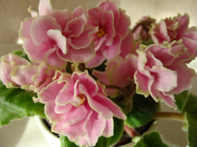 Мои цветочки - Страница 13 21dbe6477600