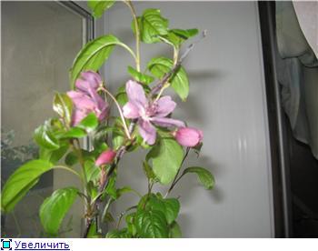 Яблоня: сорта и агротехника. B34f1d8b7093t