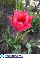 Весна идет, весне дорогу! - Страница 8 3b949853e54dt