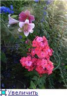 Лето в наших садах - Страница 7 E163f85206fat