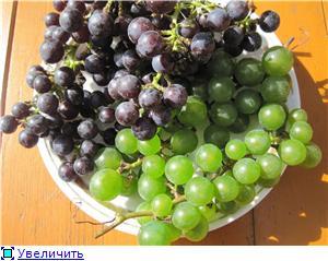Виноград. - Страница 3 Bf2a129b045ft