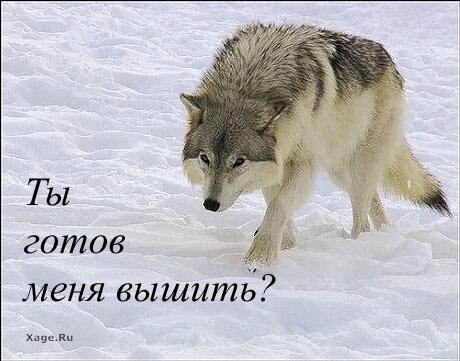 Совместные танцы с волками от Vervaco - Страница 2 3f2ee2793cc1