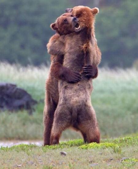 Ничто человеческое медведям не чуждо D8f1aba24705