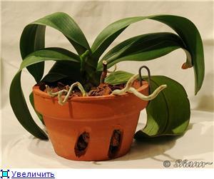 Горшки для орхидей 70c72397ff52t