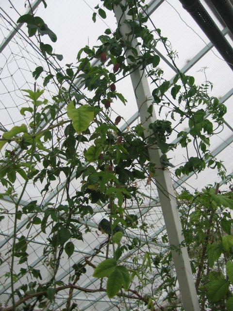 Растения из Нижегородской оранжереи 1711fd21c9e3