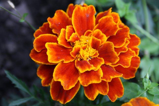 Растения от FILIGERa - Страница 2 Dcf0fef2b0eb