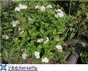 Лето в наших садах - Страница 4 53fbf3e3a2e6t