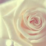 Аватары с цветами - Страница 2 6f878ca906d2