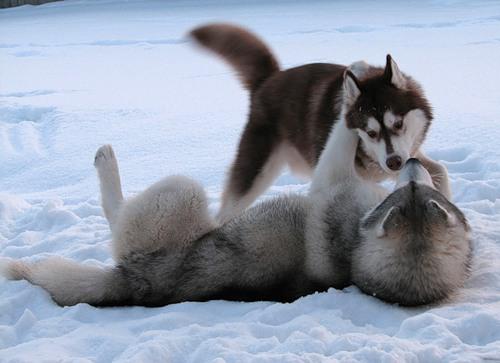 Две собаки - Страница 2 35d8ca998693