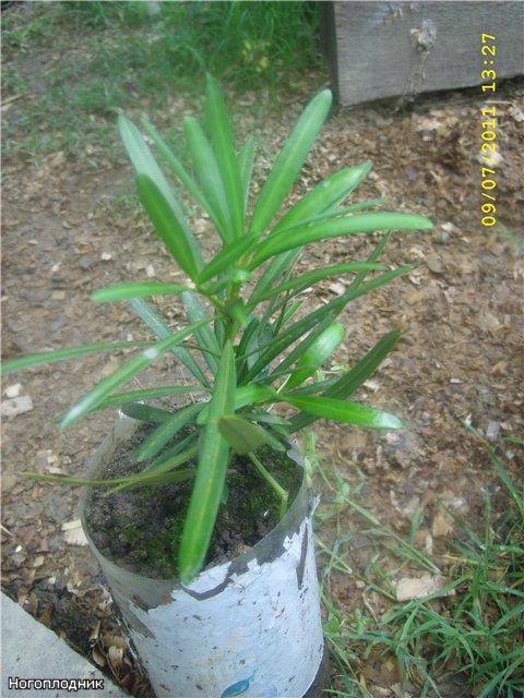 Растения из Сочинского питомника - Страница 3 A0ba4a98f316