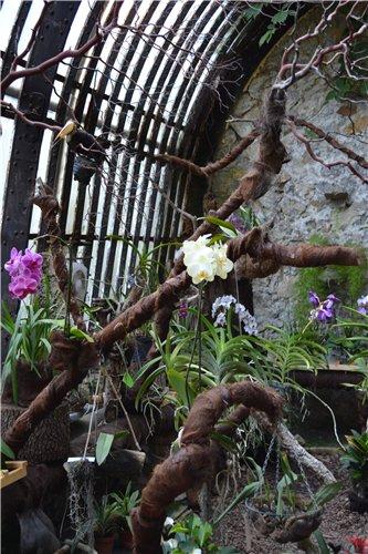 Выставка орхидей Никитского ботанического сада 59e2ea04cdab