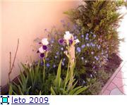 мои цветочки D9eaeb1e65cct