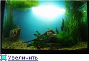 Мои аквариумы. 67e75e59375bt