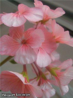 Цветочные красотки и красавцы Идущей Босиком Eccf2d21e32e