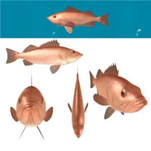 Все для аквариумов, водоемов - Страница 5 6662d50a3c4e