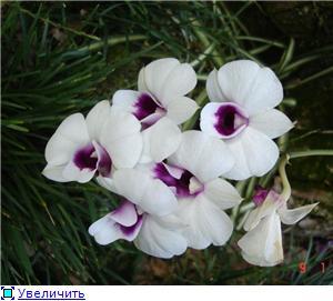Орхидеи и прочая красота на о. Пхукет B5ca776cd6dft