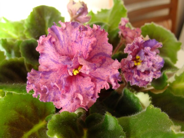 Мои цветочки - Страница 13 1a6eca18a560