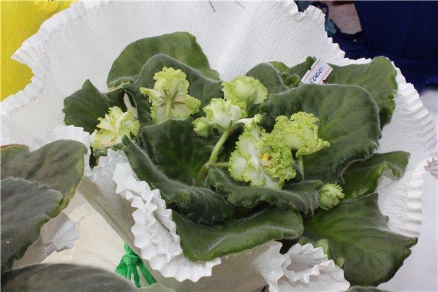 Фестиваль цветов в Алматы - «Алматы – гул кала» Bdb932414ce7