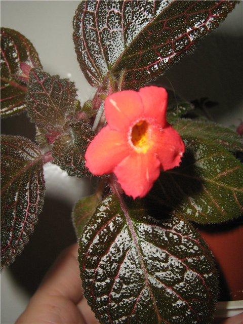 Моё цветочное богатство - Страница 21 47b44ff6afa3