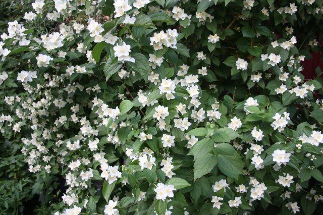 Растения от FILIGERa - Страница 2 4d26d488e719