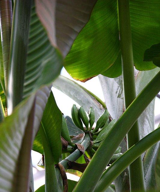 Экскурсия по Ботаническому Саду C23e662a5ac1