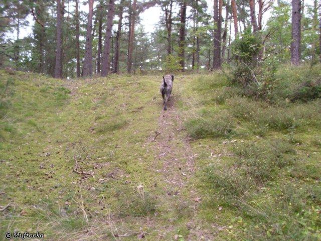 Наши собаки, друзья и гости, кот Мензурка 7531f253935e