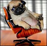 Аватары с животными - Страница 2 472f00afa6ca