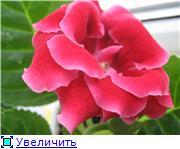 Семена глоксиний и стрептокарпусов почтой - Страница 2 45ad990ade56t