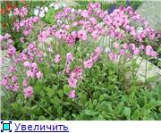 Растения для альпийской горки. 162b960c9618t