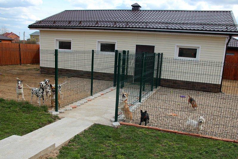 Семейная гостиница для собак в Дедовске (передержка) E29fa734300d