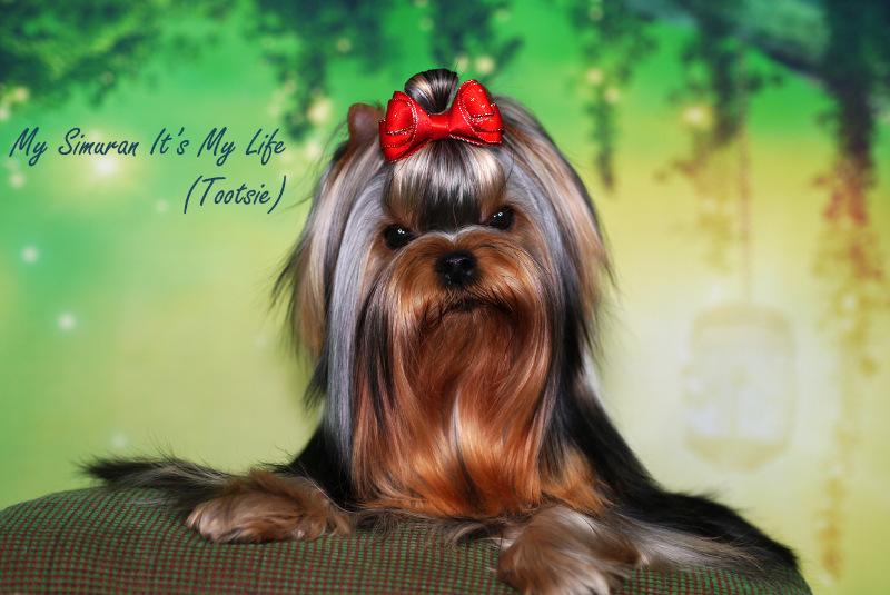 My Simuran It's My Life (Тутси)  3abe0649d19c