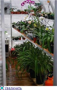 Размещение орхидей 56e3a6d5fac2t