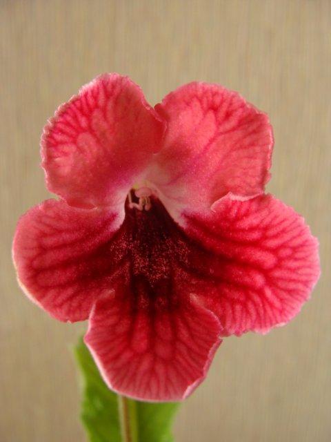 Мои цветочки - Страница 13 73f08d8a383c