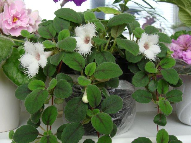 Мои цветочки - Страница 20 181e2f5bb7e4