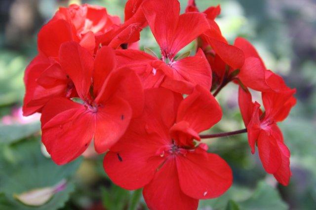 Растения от FILIGERa - Страница 3 4b2173832601