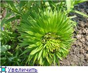 Лилии. Болезни и уход - Страница 3 463165d4e51ct