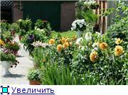 Георгины в цвету Af93e65a4c3bt