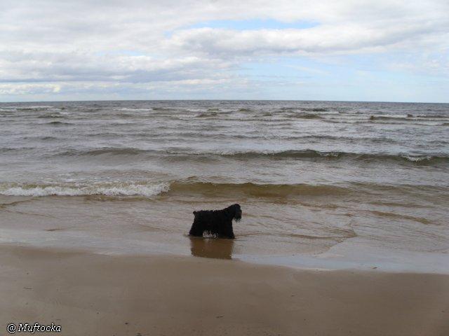 Наши собаки, друзья и гости, кот Мензурка E5594efae11e