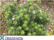 Cад Людмилы Ивановой из черкасс 7ceb20743ed5t