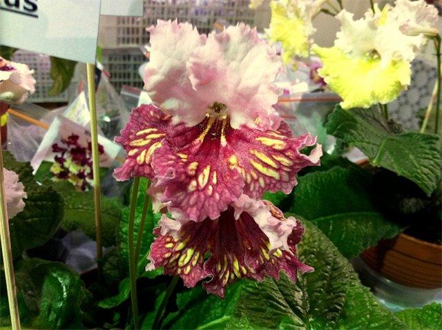 XIX Международная выставка Ландшафт и Приусадебное хозяйство-2012 72236ab7f6a0