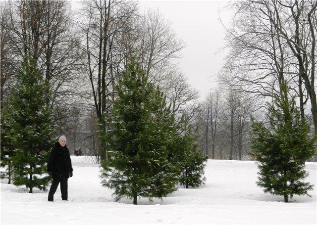 Зимняя сказка на наших фотографиях - Страница 4 C37502ccb7d3