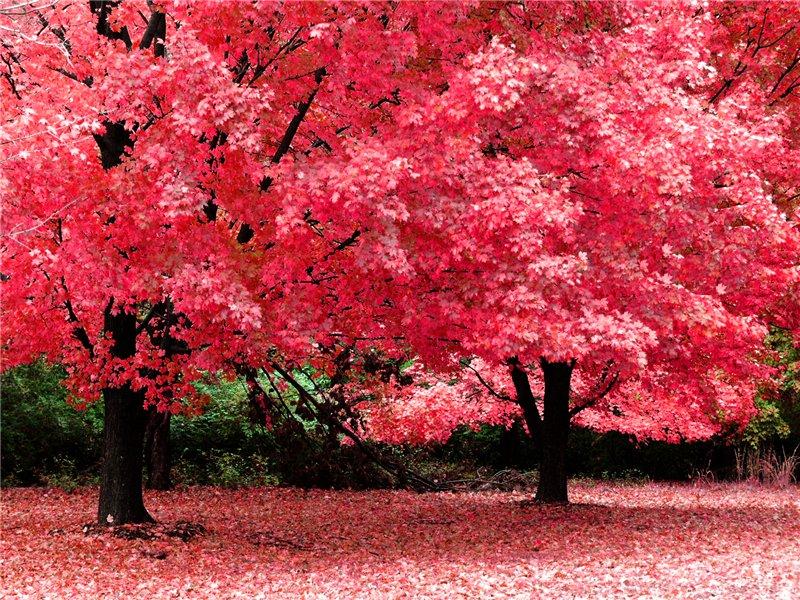 ბუნების ლამაზი ფოტოები 810850bb50c2